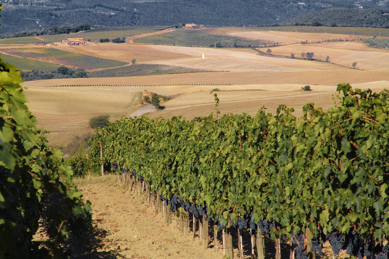 Matrimonio Vigneto Toscana : Fossacolle nelle terre del brunello il vigneto vino